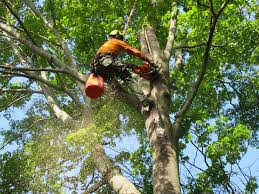 tree service company leads in Maryland